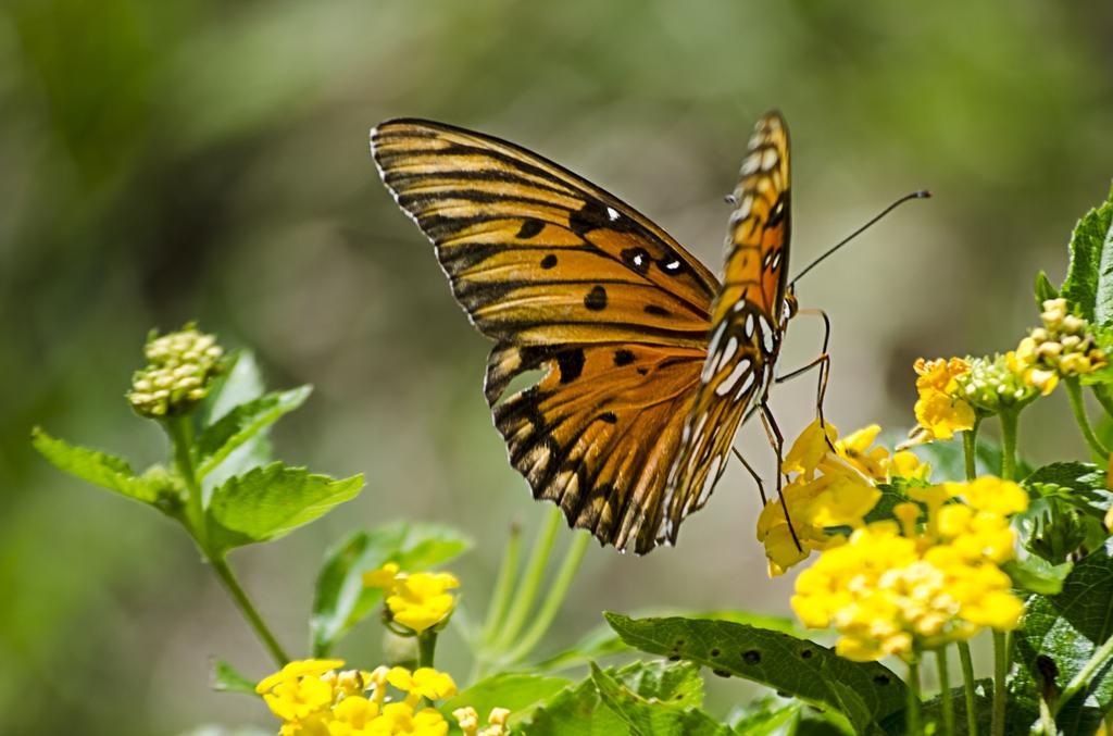 L'affiliation multi-niveaux et l'effet papillon